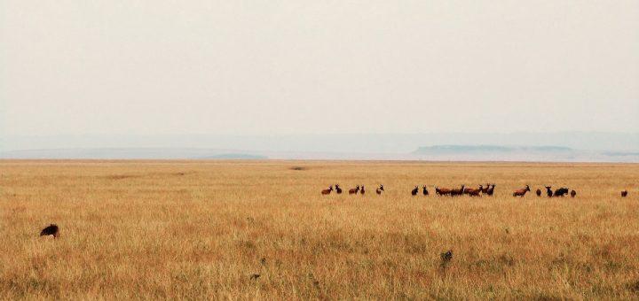 Panorama dans le Masai Mara