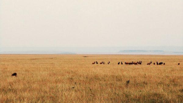 Les plaines du Masai Mara : au cœur du safari