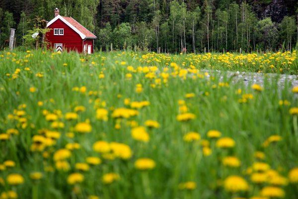 Maison typiquement norvégienne, sur la route entre Tau et Odda