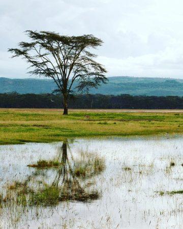 Le lac Nakuru au Kenya