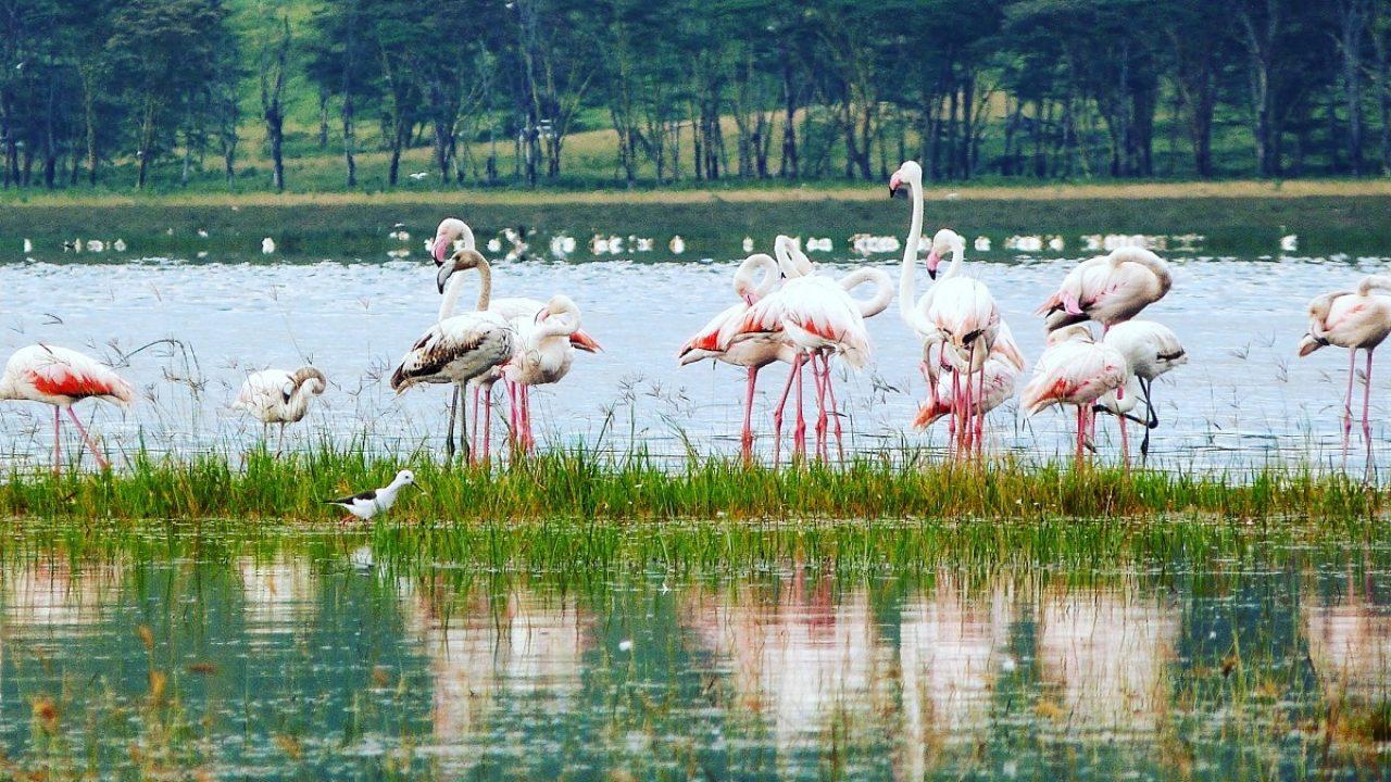 Le lac Nakuru : le safari au Kenya en dehors de la savane ! | Hashtag Voyage