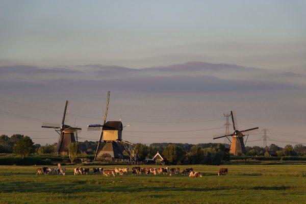 Kinderdijk et sa campagne environnante