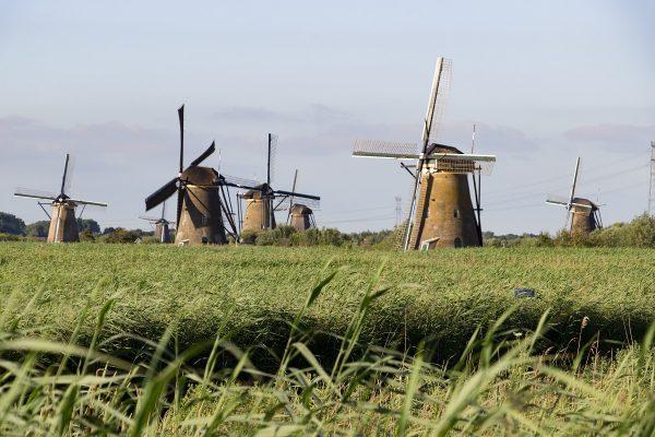 Les moulins de Kinderdijk et la végétation environnante