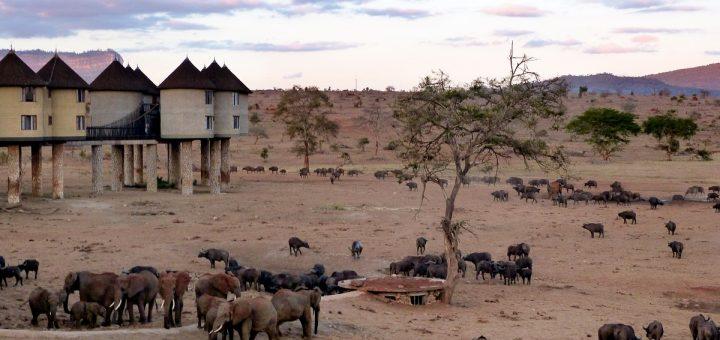 Le Sarova Saltlick Lodge au Kenya aux couleurs du couché de soleil : les éléphants au pied des lodges