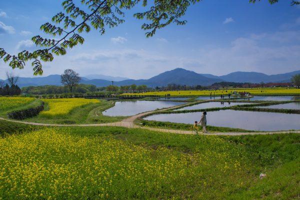 Gyeongju, dans la région du sud-est