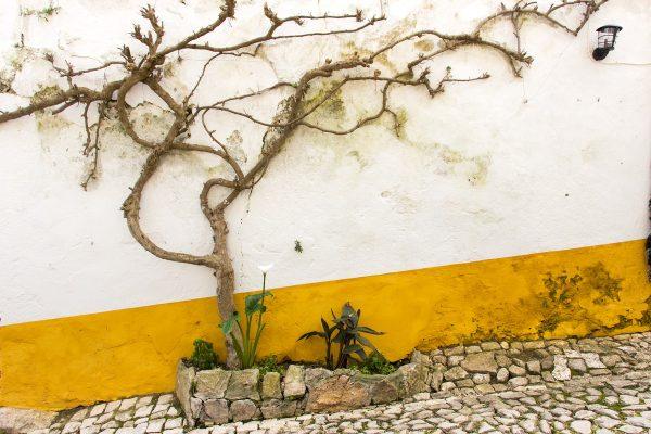 Dans les ruelles colorées d'Obidos : les murets couverts de jaune et de bleu...