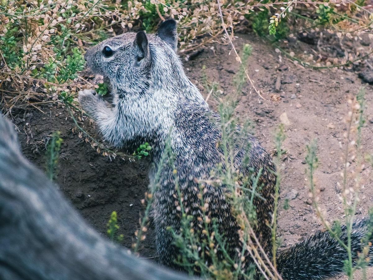 Un écureuil à Yosemite