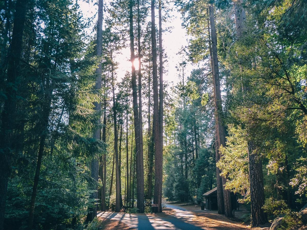 Dans la forêt à Yosemite