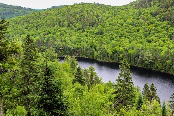 Le parc de la Mauricie au Québec : verdoyant au mois de juin