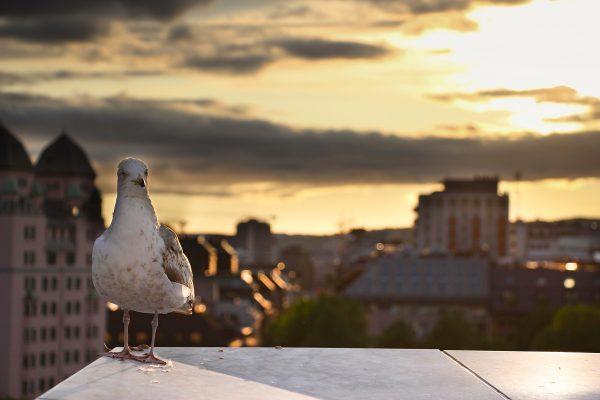 Le coucher de soleil sur Oslo, depuis le toit de l'opéra