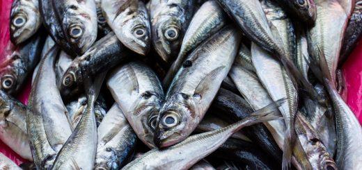 Un étal de poisson dans le marché de Bolhao à Porto