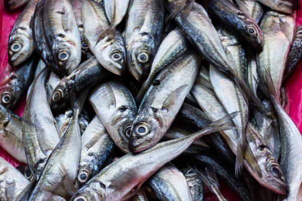 Un étal de poissons dans le marché de Bolhao à Porto