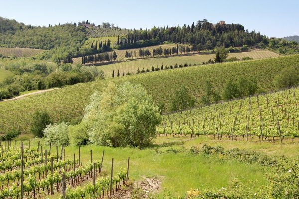 Un paysage vallonné de vignes en Toscane