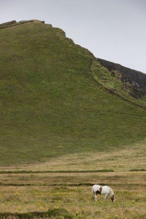 L'accès aux falaises de Kerry avec ce cheval en bas de la butte