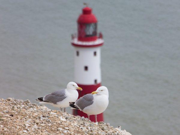 Vue sur le Beachy Head Lighthouse : les mouettes sont là également !