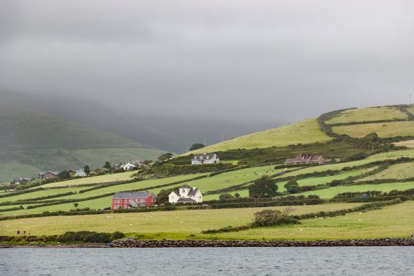 Dans la baie de Dingle en Irlande