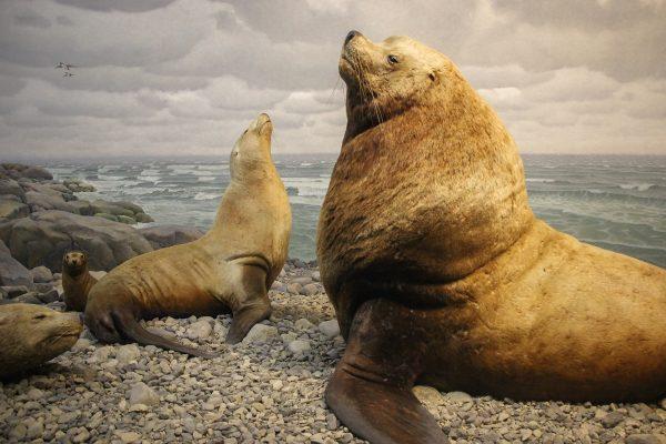 Des animaux naturalisés dans le museum d'histoires naturelles de New-York