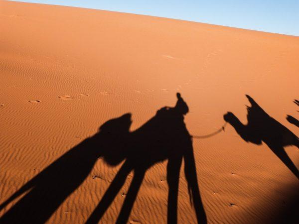 A dos de dromadaire dans le désert Erg Chebbi
