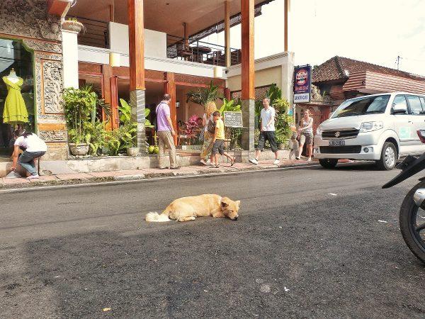 Un chien allongé sur la route, à Bali