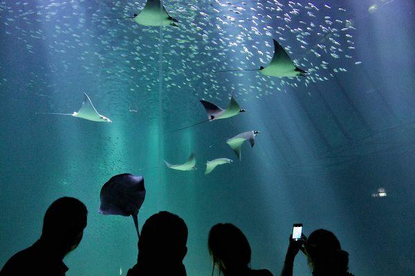 L'aquarium de Nausicaa
