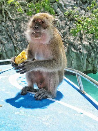 L'île aux singes à Kho Phi Phi