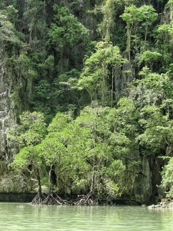 La mangrove dans un lagon de la baie de Phang Nga