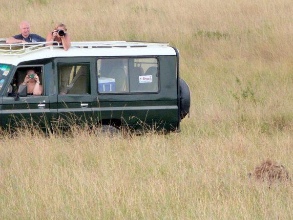 Des touristes qui prennent en photo un lion lors d'un safari en Afrique