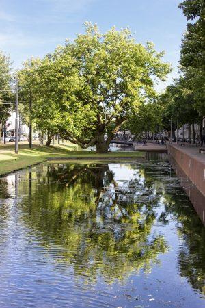 Arbre dans le centre-ville de Rotterdam