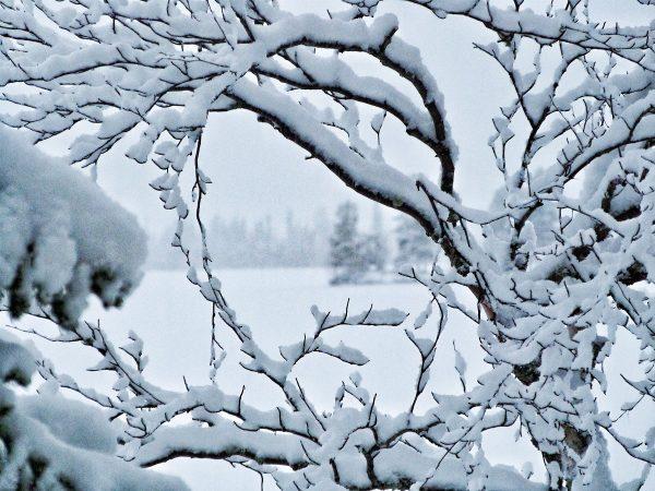 La Laponie au cœur de l'hiver