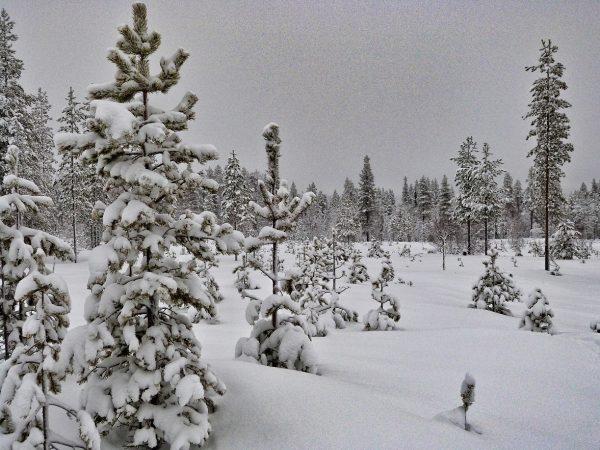 Ciel gris et neige en Laponie