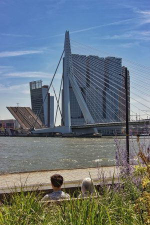 Le pont Erasme de Rotterdam