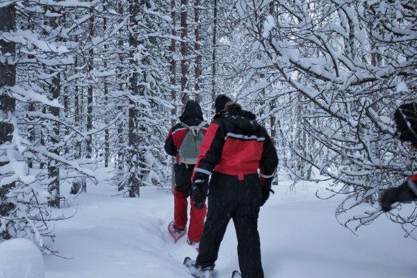 Balade en raquettes dans la forêt en Laponie