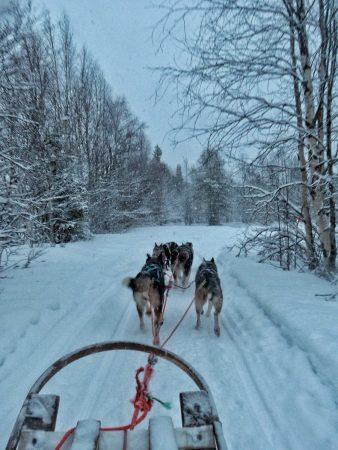 Balade en chiens de traîneaux en Laponie