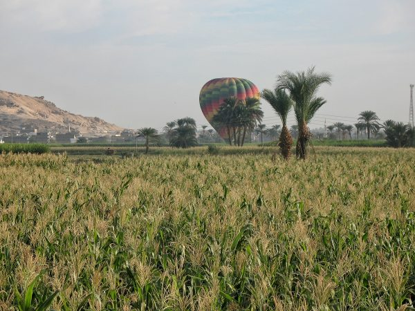 Montgolfière dans un champ près de Louxor