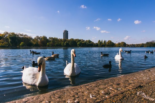 Dans Hyde Park à Londres