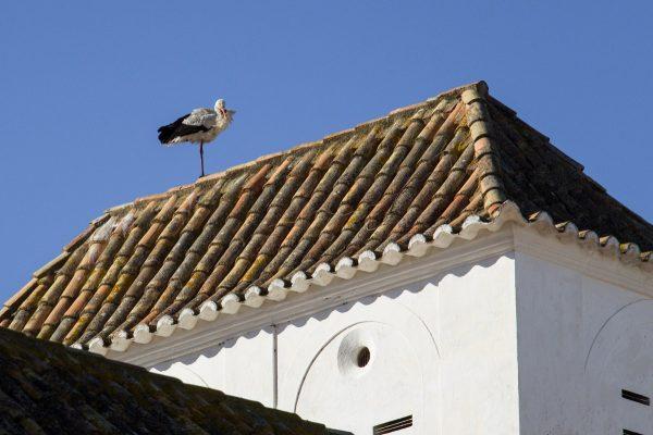 Les cigognes très présentes dans l'Algarve et à Faro