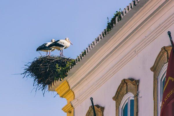 Cigognes en Algarve