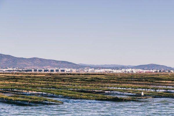 La culture d'huîtres dans la Ria Formosa