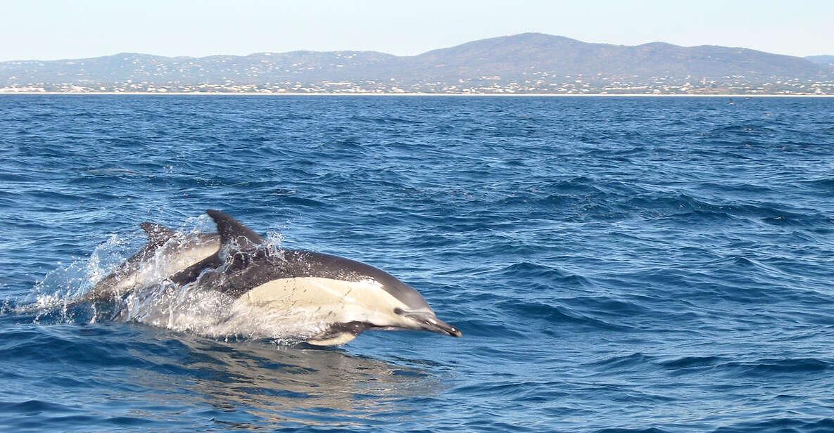 Observation des dauphins au départ de Tavira
