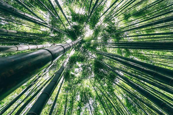 Forêt de bambous à Boseong