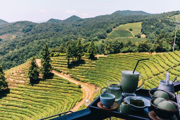 Salon de thé avec vue sur les plantations à Boseong