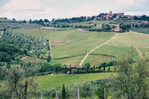 Vignes dans la campagne toscane