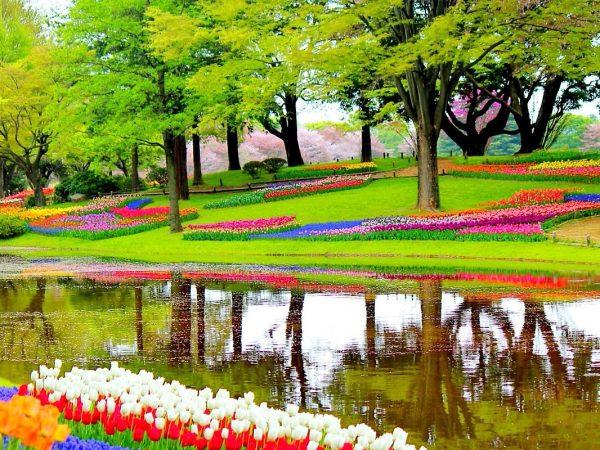 Jardins de tulipes de Keukenhof à visiter aux Pays-Bas