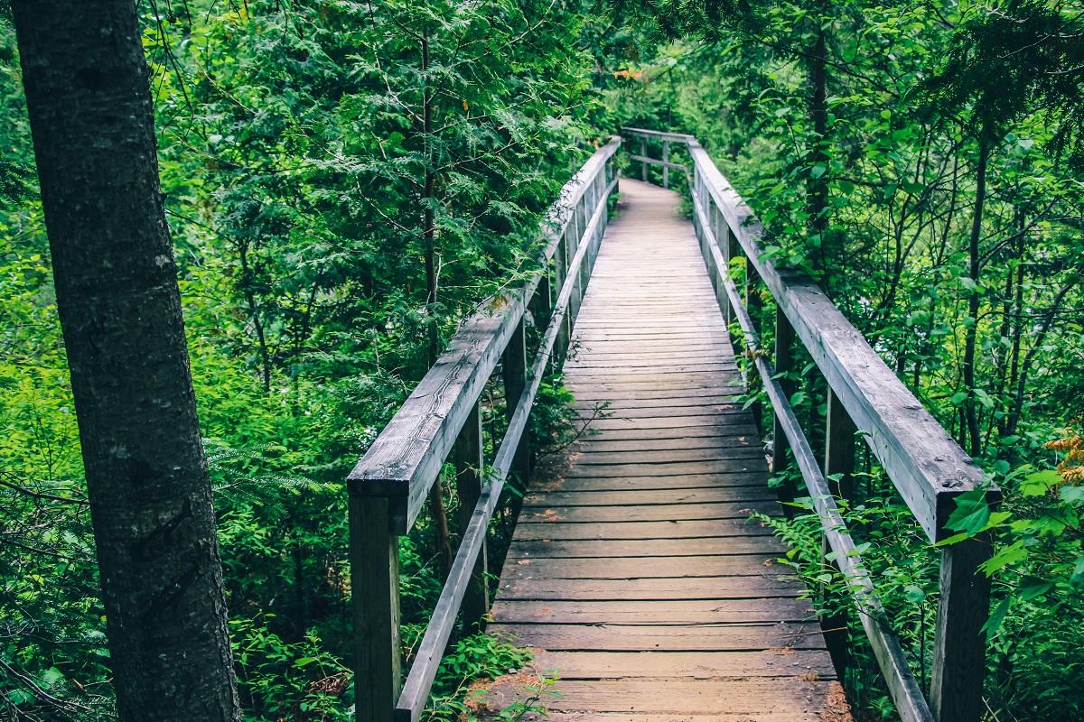 Chemin de randonnée dans le parc de la Mauricie au Québec