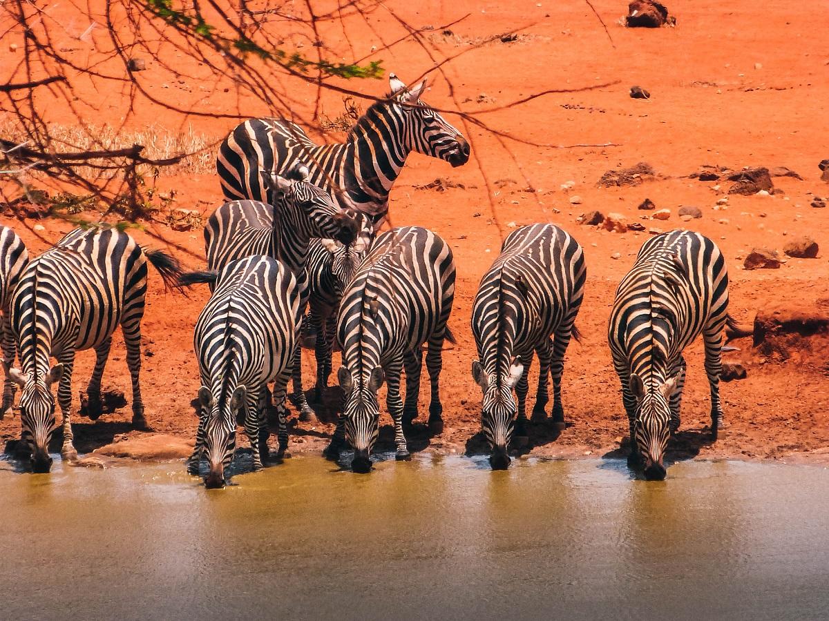 Couleur ocre dans le parc national de Tsavo au Kenya