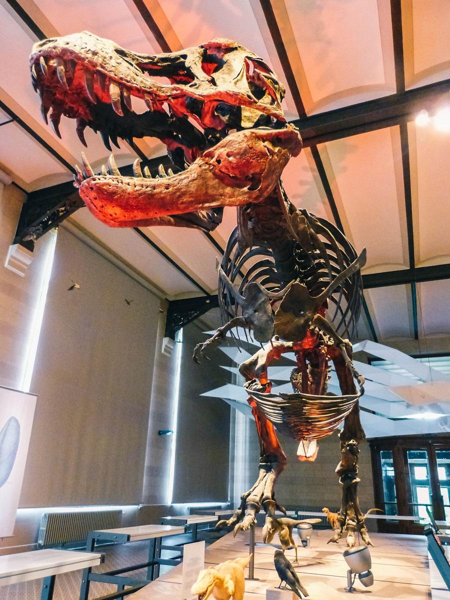Squelette de dinosaure dans le museum de sciences naturelles de Bruxelles