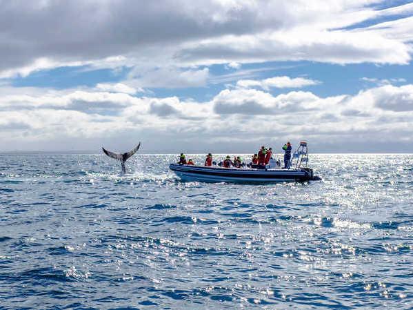 Observation des baleines au large de Reykjavik en Islande