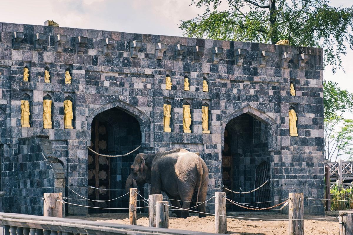 Eléphant dans le zoo de Pairi Daiza