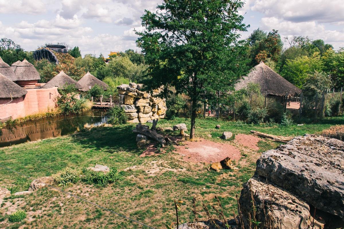 Dans le monde de l'Afrique à Pairi Daiza