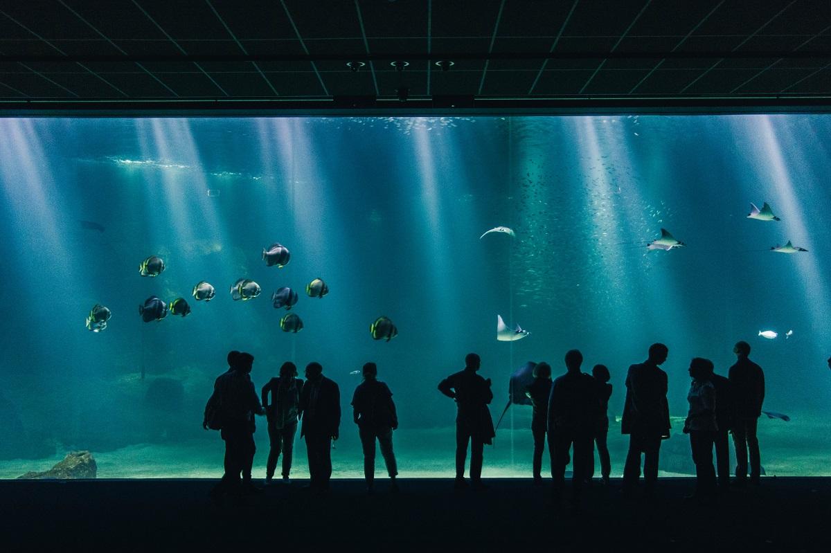 Grande baie vitrée à Nausicaa